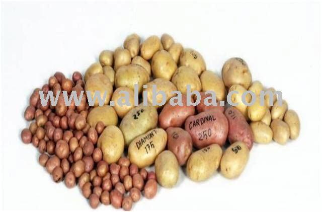 Semi di patate tabella di patate piante di orchidee for Semi orchidea