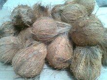 COCONUTS SRI LANKA