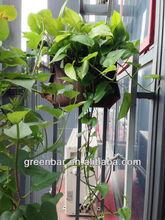 Piante da fiore-- autunno verde paesaggio parete design