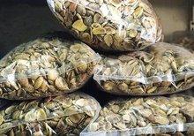 bushmango seed