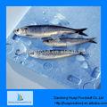 Poisson congelé sardine poisson glace,
