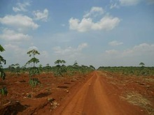 Land for agriculture and agro-industries