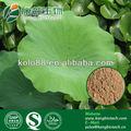 Lotus 20% flavonóides extrato, redução de lipídios no sangue extratosvegetais