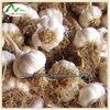 2013 New Plant Extract Garlic Extract (Allicin,Alliin)