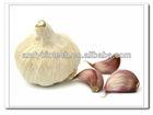 Professional Manufacturer Garlic Extract Allicin Powder
