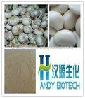 Hot Selling Garlic Extract Allicin Powder
