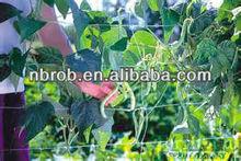 Garden Pea & Bean NETTING