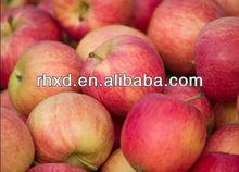 2013 new crop fresh fuji apples sweet apples organic apples