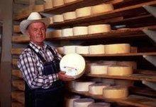 Menonite Cheese