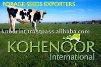 Fodder Seeds / Forage Seeds