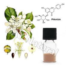 Natural Malus pumila Mill L. Manufacturer Apple Polyphenols