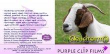 Goat Farming Video
