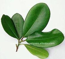 Sandalwood Oil (East Indian)