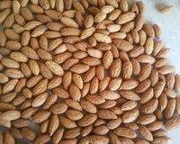 olive kernel