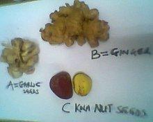 A= GARLIC ; B= GINGER & C=Kola nut
