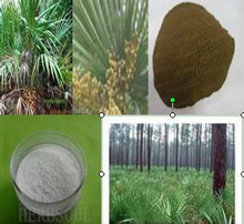 100%natural high quality Saw Palmetto Fruit Extract