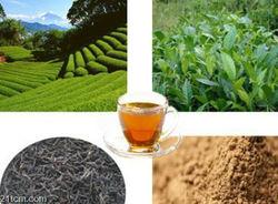 100% Natural Black Tea Extract