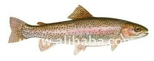 RTrout