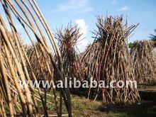 Rattan Poles raw Materials