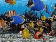 Deep sea live fish