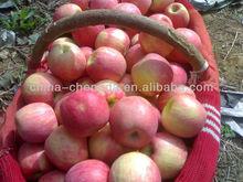 2013 Chinese gala apples/fuji/huaniu