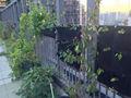 الخس مع الأخضر-- بار الجدران حديقة منزل صغير جيب