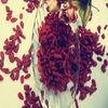 dried fruit-chinese herb medlar wolfberry good price