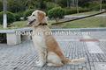 la couche supérieure en cuir pour chien colliers pour chiens de formation