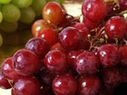 High Quality Cold pressed Grape Seed Oil