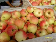 2013 new crop Fresh fuji apple,apple fruit,fresh apple