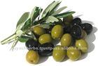 Essential Oil 100% Pure Olive Oil in bulk quantity