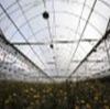 Transparent Agricultural Film