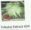 Tribulus Terrestris Extract 45%