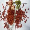 Chinese dried fruit goji berries bulk for sale