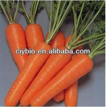 100% Natural Skin Care Products Carrot Seed Essential Oil 99%
