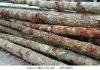 SCH Piling Timber