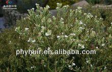supply extraction stevia plant,extraction stevia plant 98%,stevia