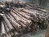 Ebony logs