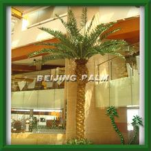 Phoenix canariensis,plastic palm,artificial tree