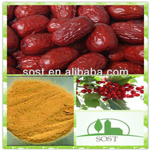 Manufacturer Sales Organic Chinese Date Extract Powder