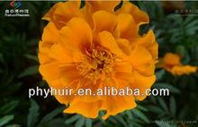 High quality marigold p.e. ,marigold p.e. 5%,marigold