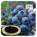 O extracto de mirtilo( cranberry)
