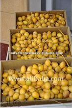 Sweet Fresh Date Fruit
