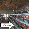 Taiyu battery poultry chicken cage for layers ( enclosed our oversea farm pictures)