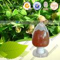 Producto de la fábrica álamo Epimedium p. E polvo