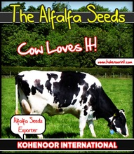 Alfalfa Seed High production