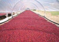 Rain Forest Alliance Estate Coffee