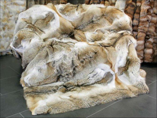 Mantas de Piel Natural 123 Coyote Manta de Piel