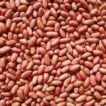 Sudan peanut