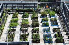 kidney bean with Green-bar Square gardening planter
